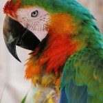 Macaw-uaepigeonb (57)