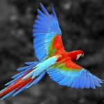 Macaw-uaepigeonb (59)